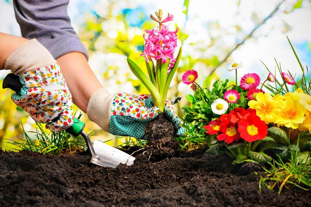 <center><b>Jardines decorativos: Un lienzo en blanco para hacer volar tu imaginación</b></center> 2