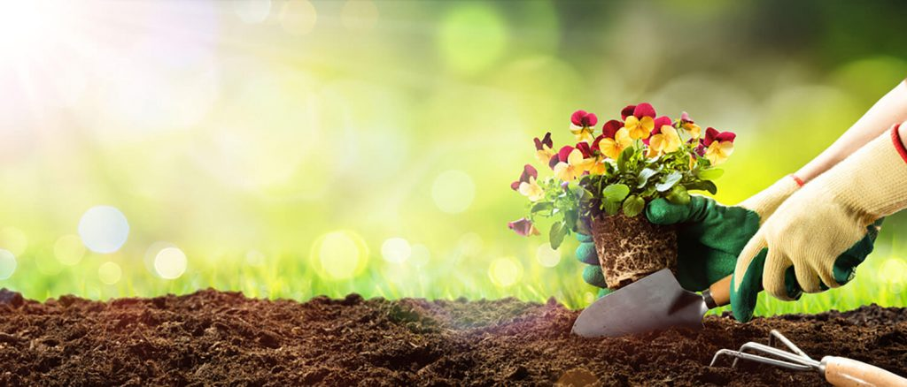 <center><b>Jardines verticales: Un oasis de inspiración</center></b> 6