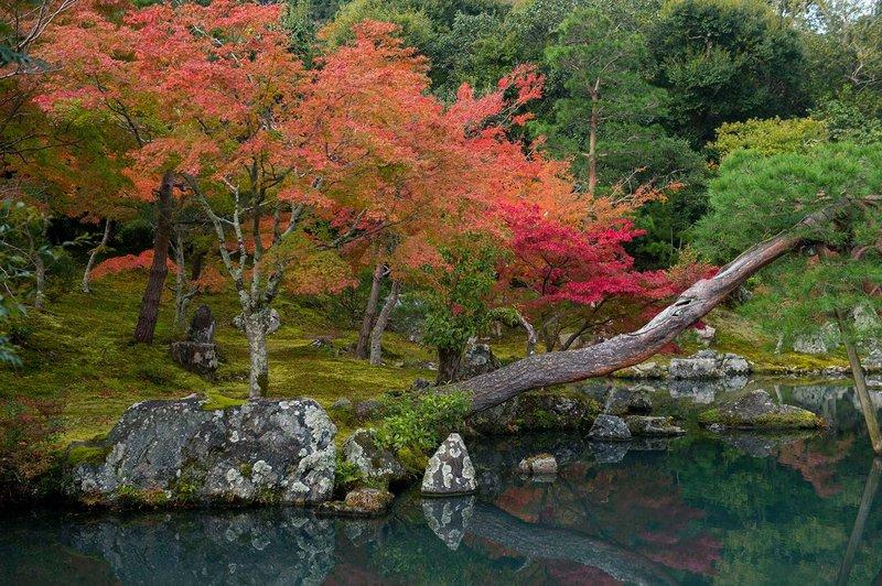 <center><b>Jardines Japoneses: Un símbolo de la eternidad de la naturaleza</center></b> 2