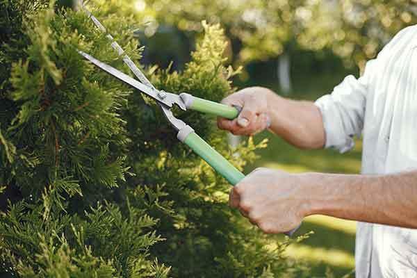 Herramientas de jardín: Las esenciales 1